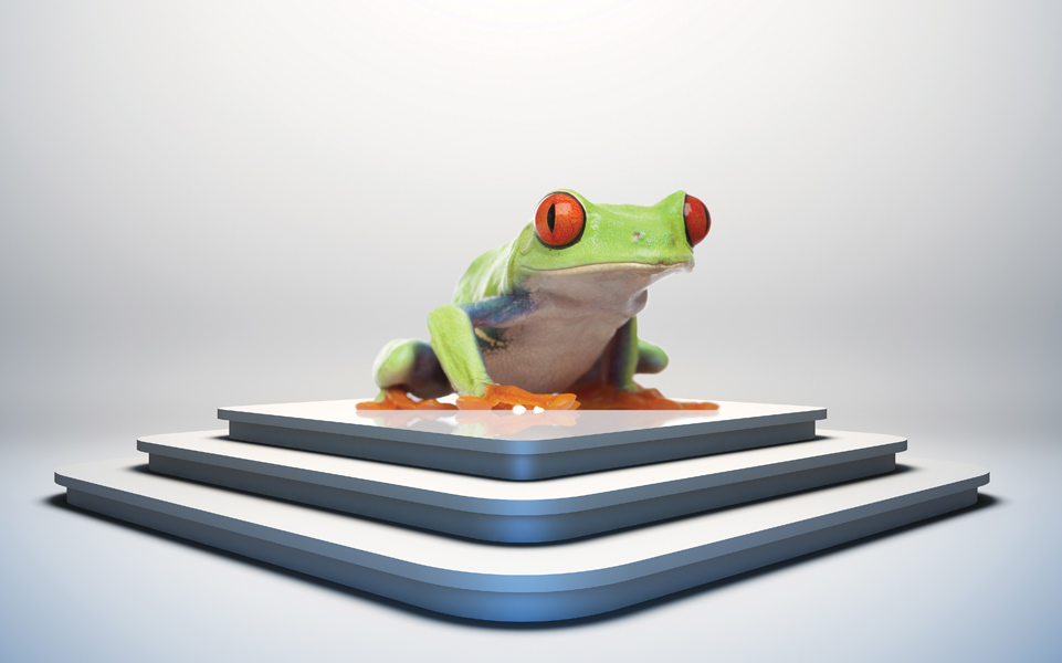 A frog sits atop a stack of books.